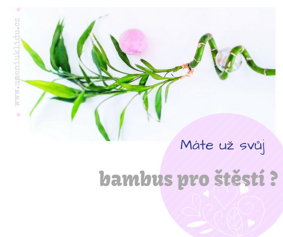 Bambus pro štěstí